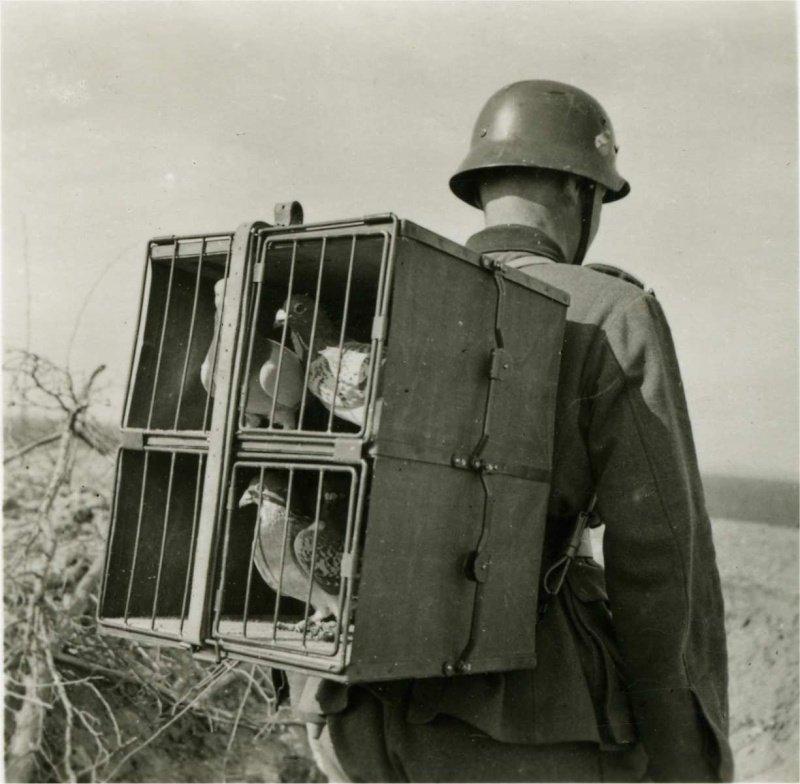 Soldat allemand et pigeons