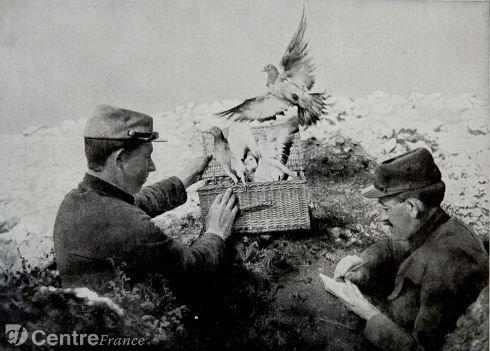 museum-expo-les-animaux-dans-la-guerre-le-pigeon_1697065